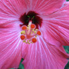 Flowers : 1 gallery with 6 photos